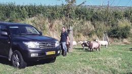 schapenw3416